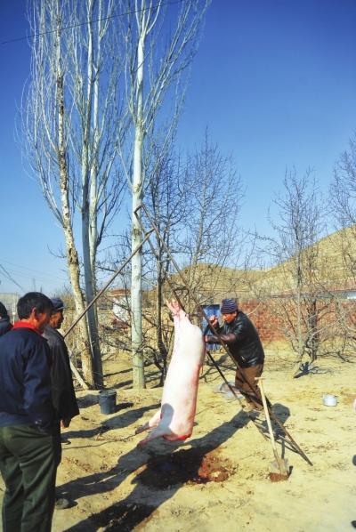 腊月二十六:乡土甘肃:杀年猪