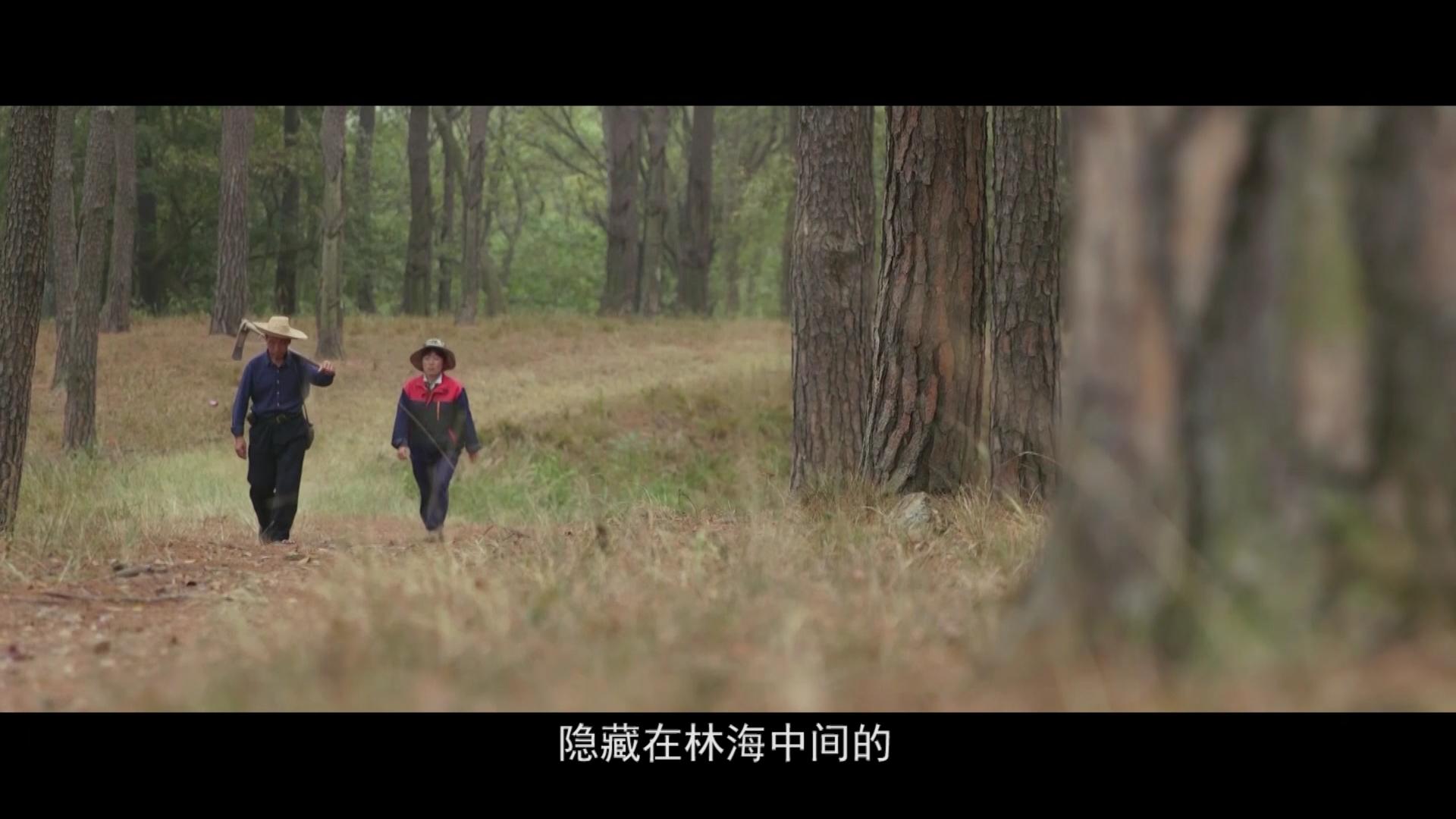皇甫山:四代人的绿色守望(高青旺、高红)[00_06_16][20200116-084254].png