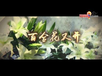 百合花又开1.jpg