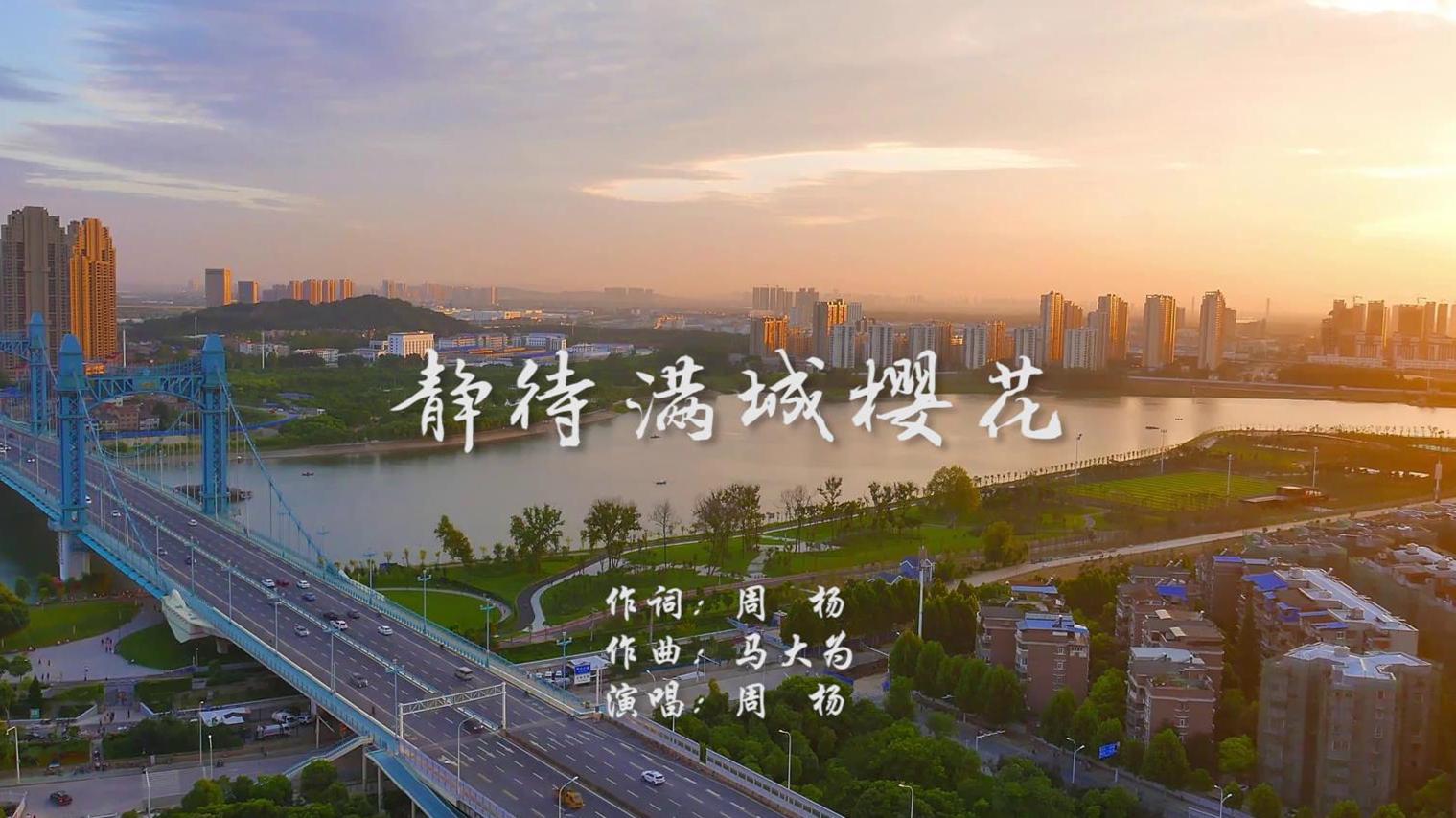 靜待滿城(cheng)櫻(ying)花MV 周楊(yang)封(feng)面圖.jpg